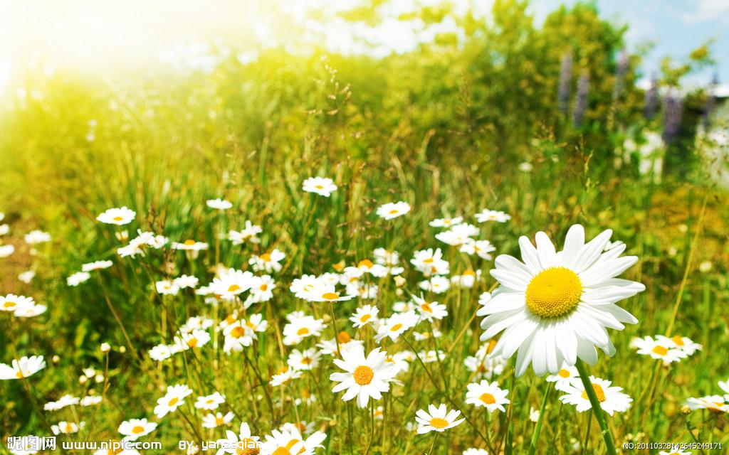描写春天花草树木的优美句子